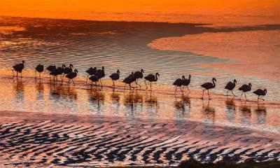 爱德阿都·阿瓦罗·安第斯国家保护区内的火烈鸟