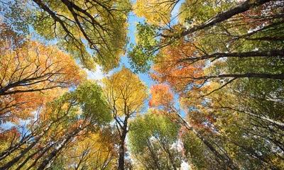 爱德华王子岛的森林和树冠